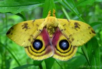 io-moth-1-large1
